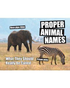 ANIMAL PROPER NAMES